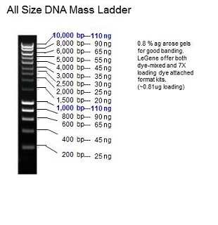 All Size DNA Mass Ladder (0.2-10 kb)