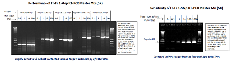 Fr-Fr 1-Step RT-PCR Master Mix, w/wo Dye (5X)