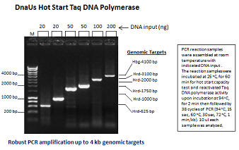 Glycerol-free DnaUs Hot Start Taq DNA Polymerase