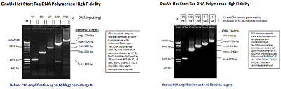 DnaUs Hot Start Taq DNA Polymerase High Fidelity (up to 12 kb)