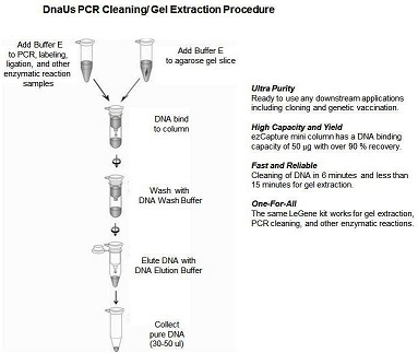 PCR Cleaning/Gel Extraction  Miniprep