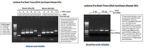 LeGene Pre Real-Time cDNA Synthesis Master Mix (2X or 5X)
