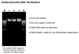 Genomic DNA Miniprep